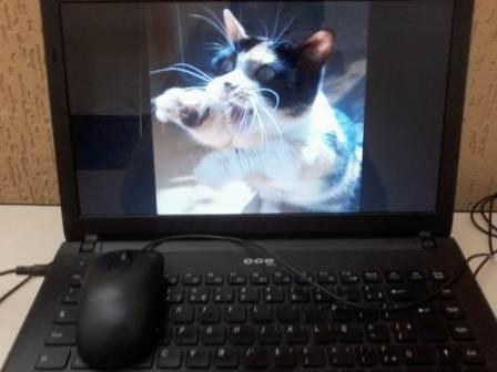 """A cena demonstraria apenas uma foto de um animal em um computador. Porém de acordo com Roland Barthes, o objeto ao ser ressaltado pode induzir a foto a outro sentido, distorcendo assim a primeira realidade da foto e criando outra realidade. Ao se colocar a legenda: """"Entre gatos e ratos"""", a primeira realidade (em que é apenas uma foto de um gato em um computador) poderia ser modificada para uma outra realidade que mostraria o conflito irreal entre um gato e o """"mouse"""" que representaria um rato"""